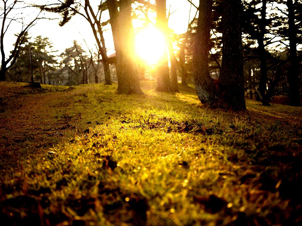 青森 風景 秋 冬 上北 六戸町 館野公園 幻想的 夕陽 木々 芝生