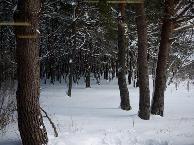 冬を楽しむ@三沢市民の森