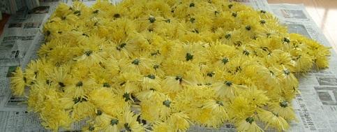 菊の里!南部の食用菊