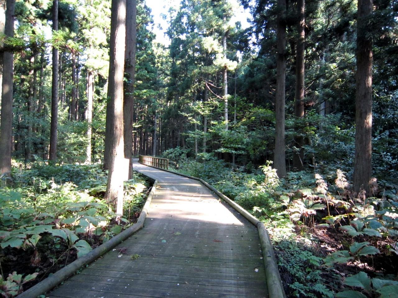 青森 津軽 五所川原市 風景 夏 昼 晴天 森林 遊歩道 散策道
