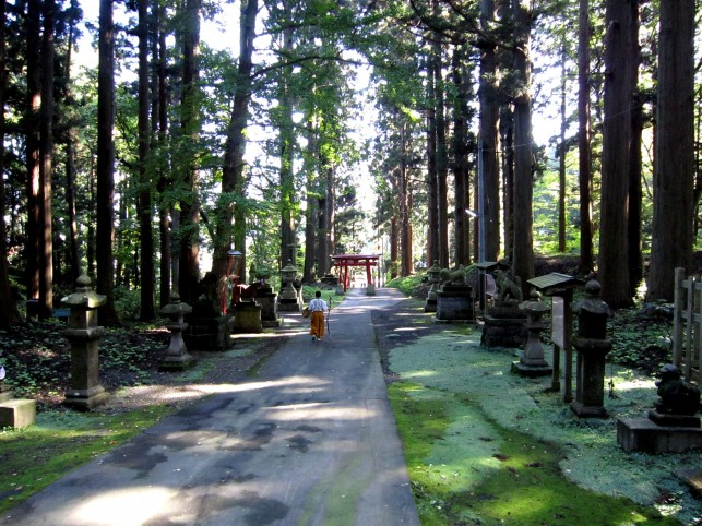 雄大なる県下最高齢の大杉(五番札所:十腰内観音堂)
