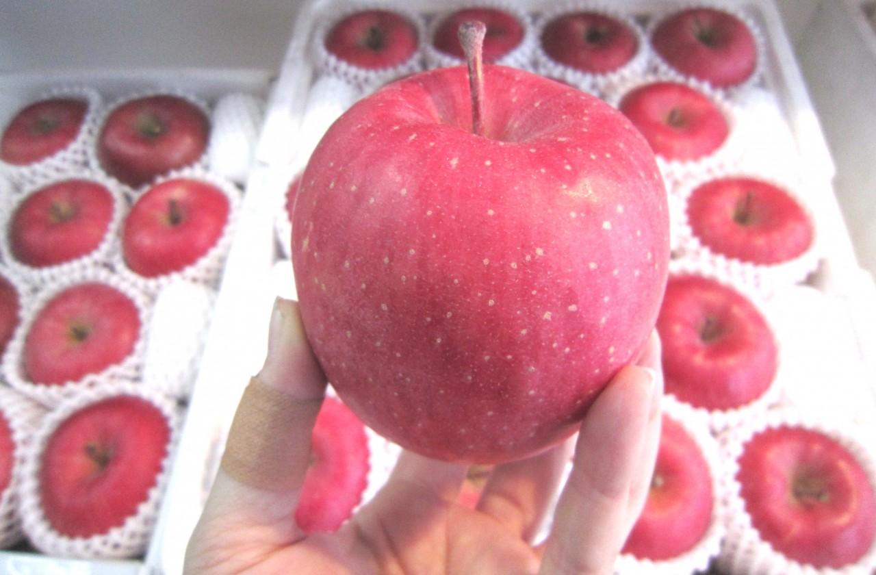 青森 リンゴ りんご 林檎 ふじ