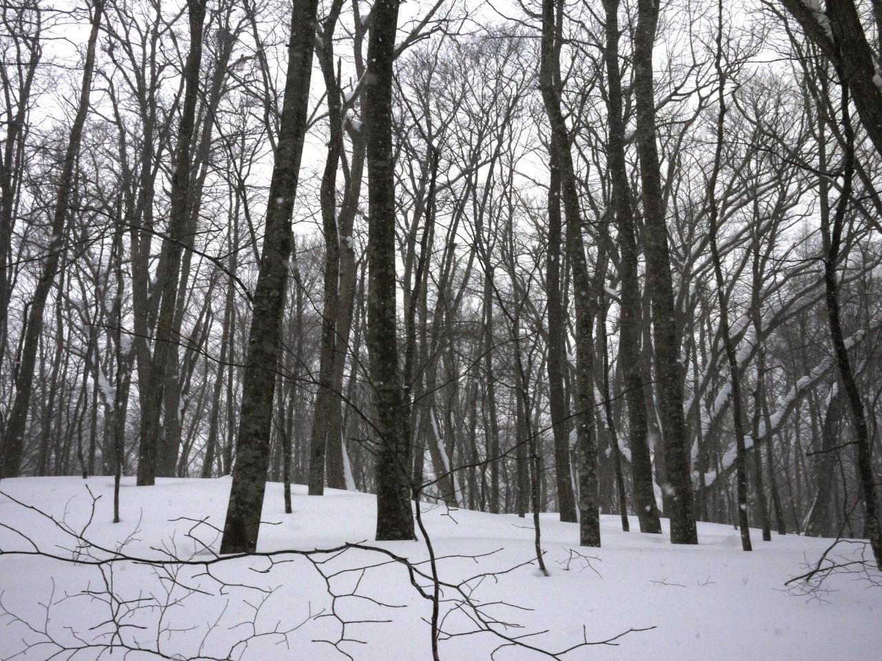 青森 上北 十和田市 風景 冬 雪 森林 雪原