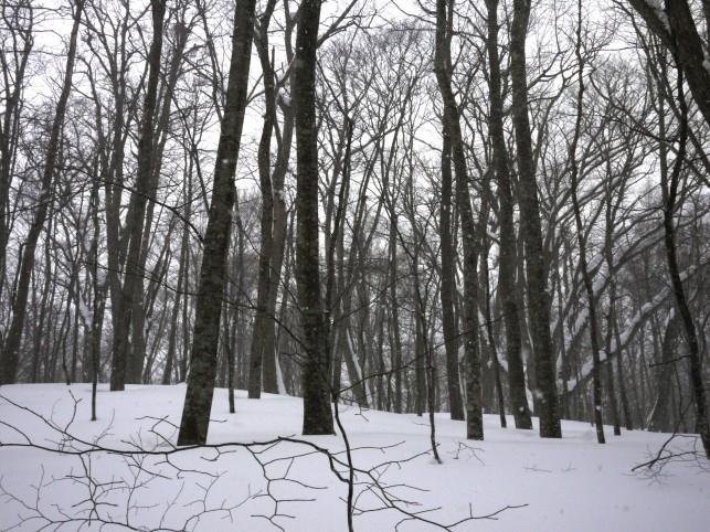 スノーランブリング~蔦の森~