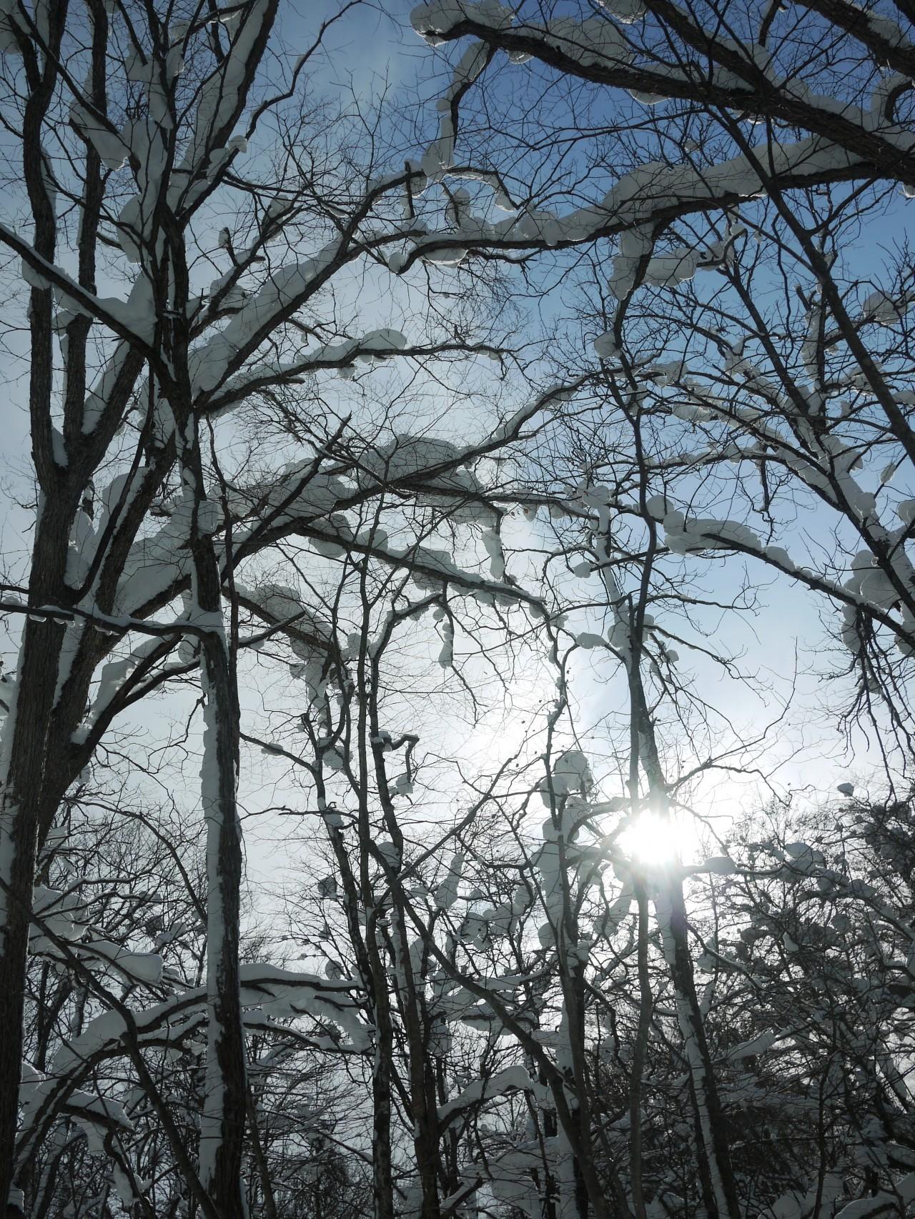 青森 上北 十和田市 風景 冬 雪 木 樹 太陽 木漏れ日