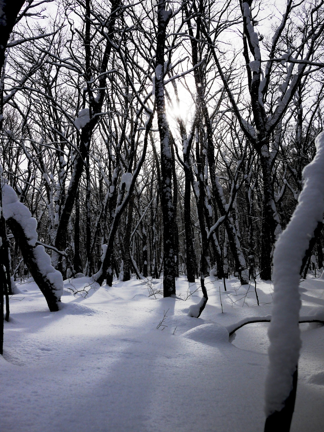 青森 上北 十和田市 風景 冬 雪 木 樹 森林