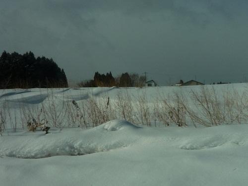 青森 上北 三沢 風景 冬 晴れ 雪 積雪 平原