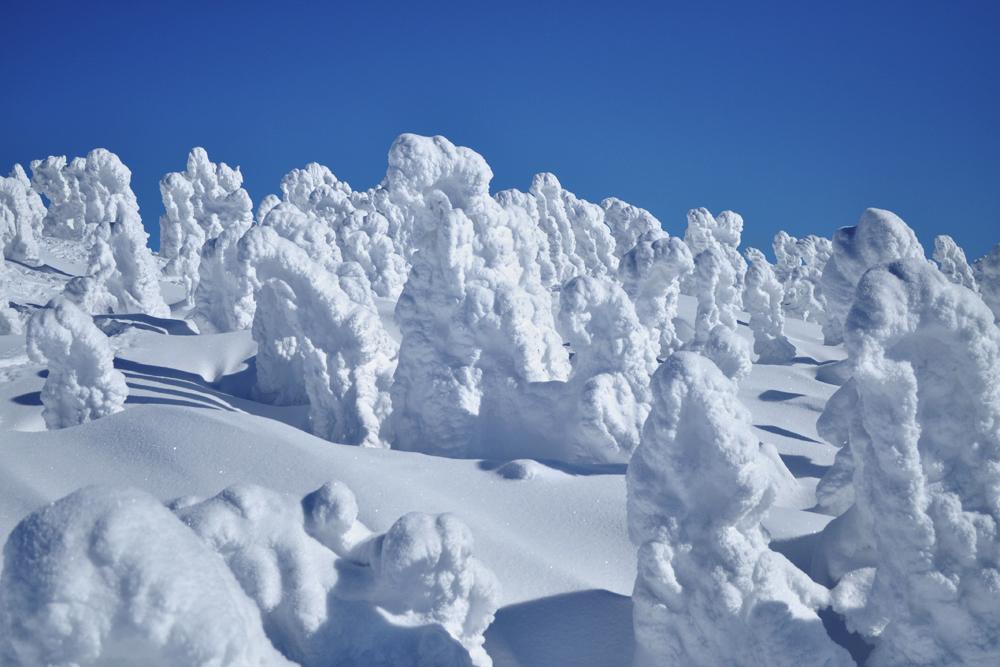 中國觀光客又發功,八甲田山樹冰都不放過