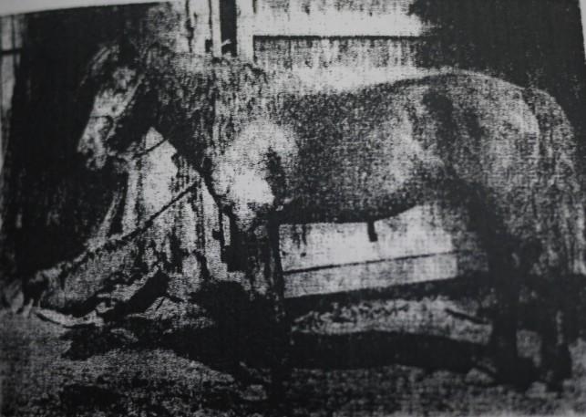 南部馬の歴史6
