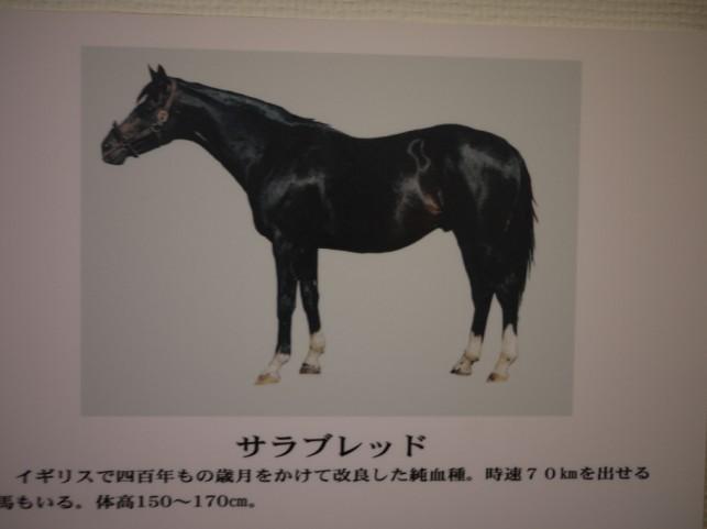 馬の種類1