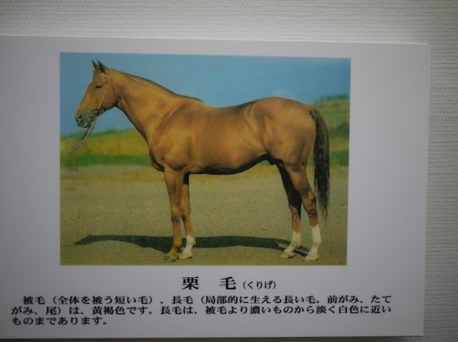 馬の毛の色名称☆パート1