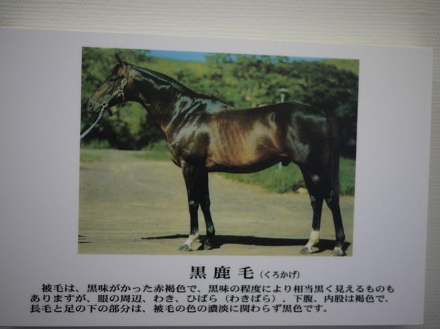 馬の毛の色名称パート2
