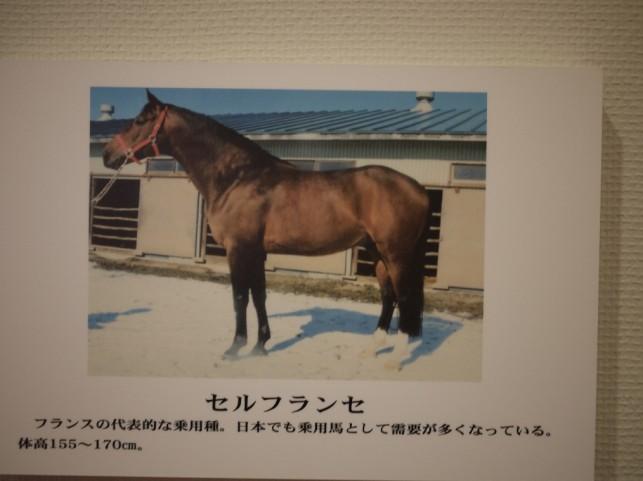 馬の種類2