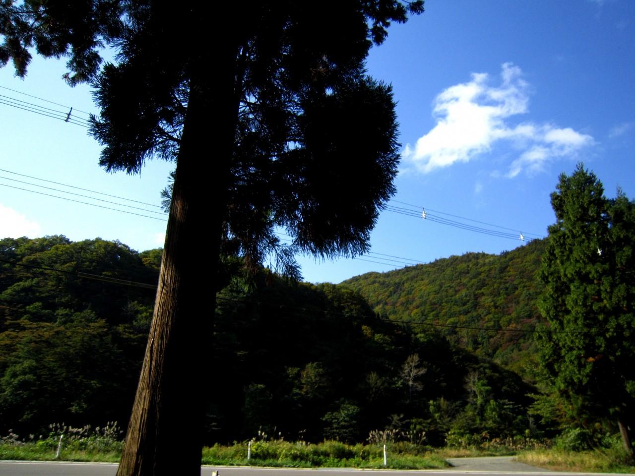 青森 津軽 深浦町 風景 冬 昼 森林 小道 樹 晴天 空