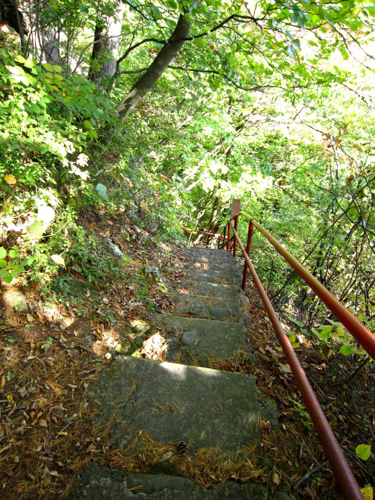 青森 津軽 深浦町 風景 冬 昼 森林 小道 樹 階段