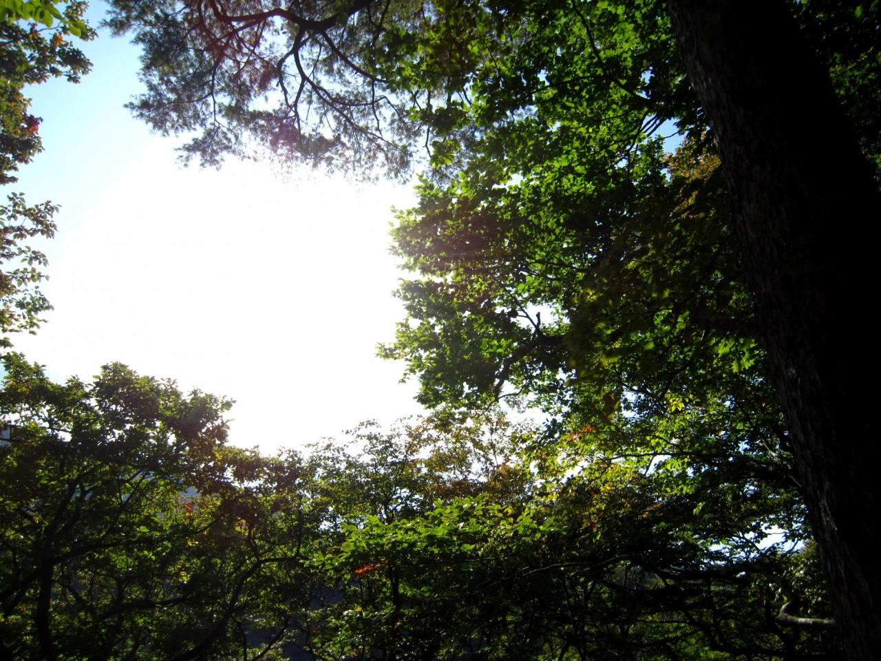 青森 津軽 深浦町 風景 冬 昼 苔 木 森 樹 晴れ