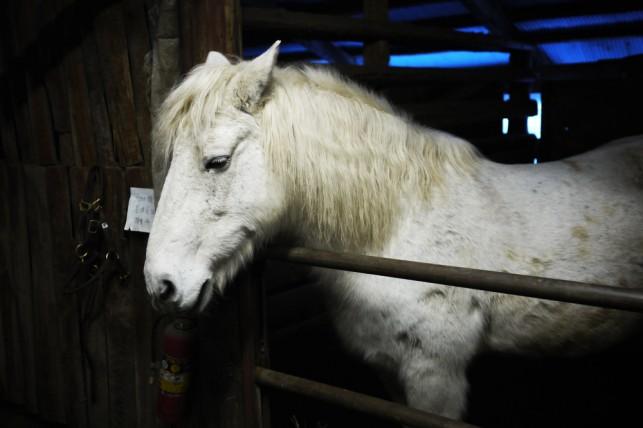 デリ君お気に入りのお馬さん