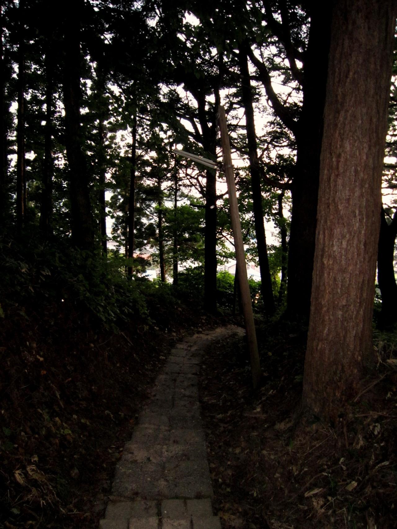青森 津軽 中泊町 風景 森 林 樹 木 春 夕方