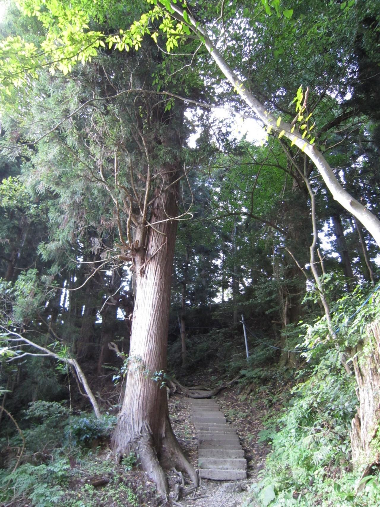 青森 津軽 大鰐町 風景 森 階段 春 木 杉