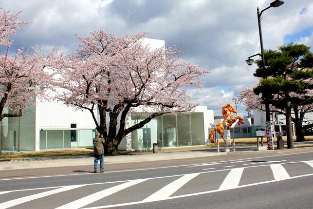 桜と現代美術館の写真を撮る人