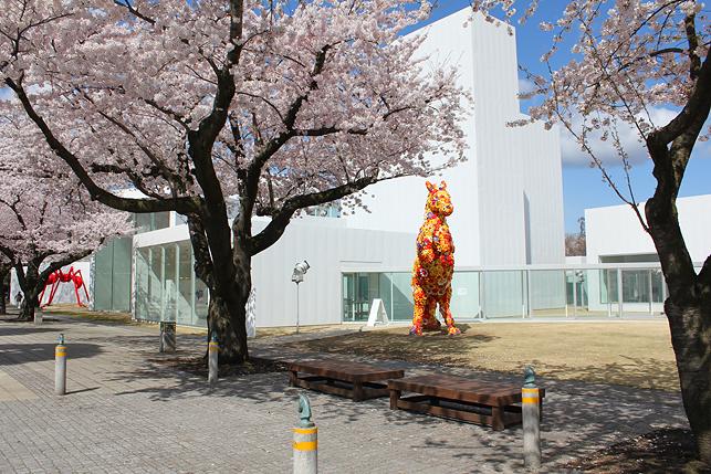 フラワーホースと桜