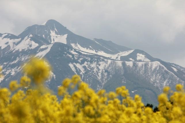 写真:岩木山と菜の花5月24日01