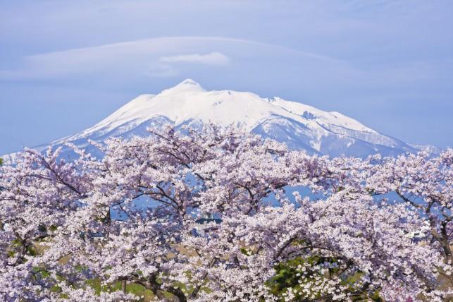 写真:岩木山と桜