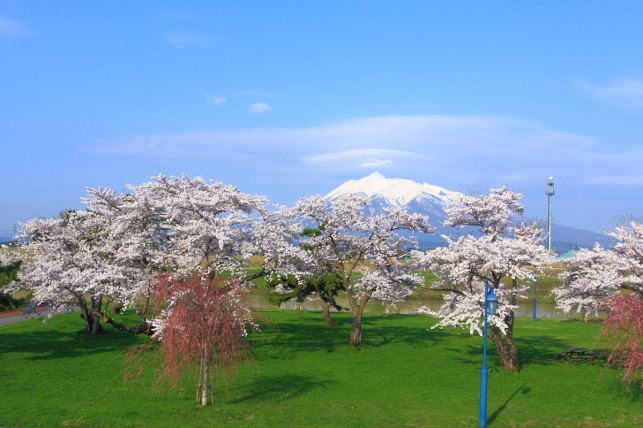 写真:岩木山と桜。全景