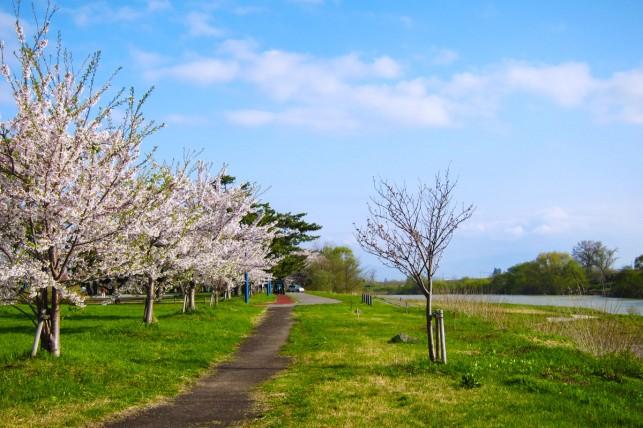 写真:岩木川河川公園全景