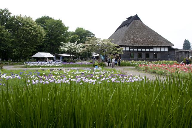 色とりどりの花が咲き乱れる初夏の鯉艸郷