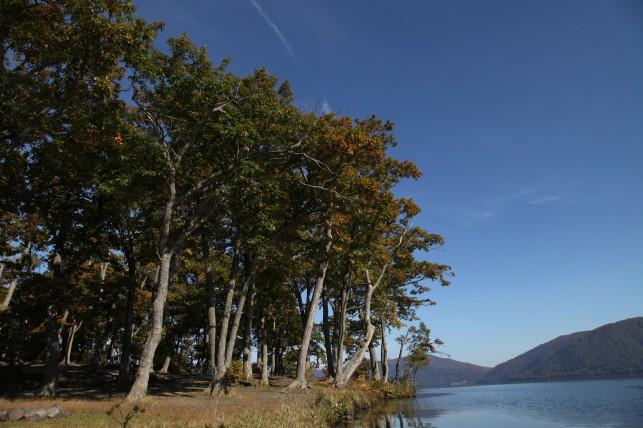 カヌーから見える十和田湖の景色