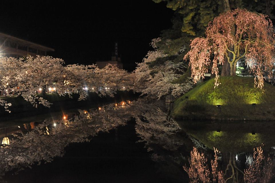 水面の夜桜