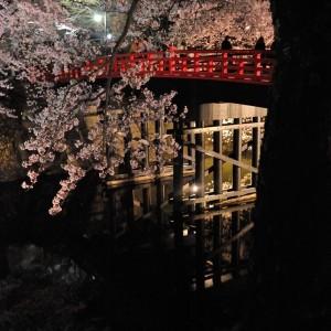 橋上の夜桜