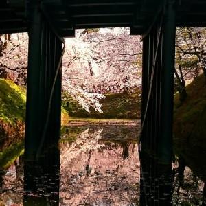 橋の下の花影