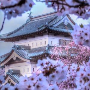 ふんわり桜と弘前城