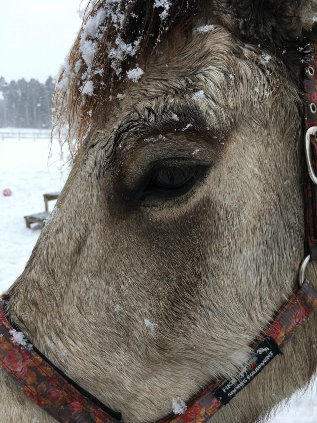 冬の青森を楽しむ方法!発見。